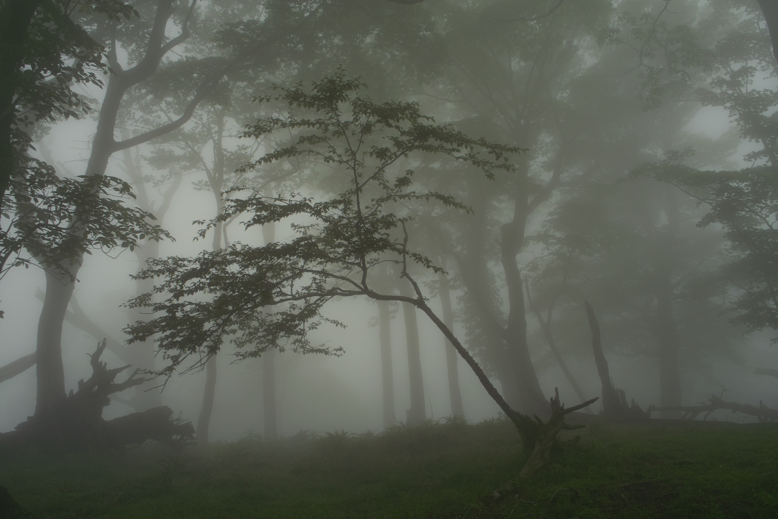 Quotes About Mist Or Fog. QuotesGram